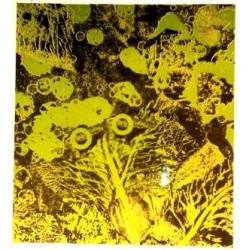Lithography Tharrats 866